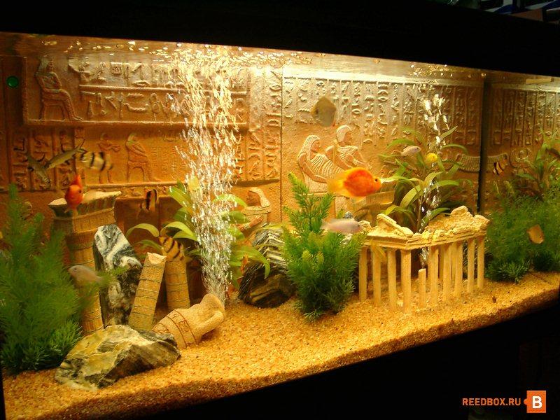 Где купить аквариум в Красноярске