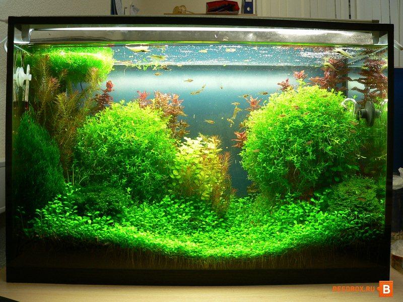 Купить морской аквариум в Красноярске