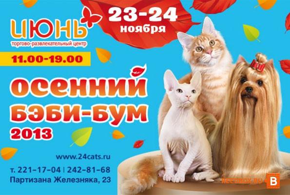 Выставка кошек в ноябре