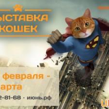 Выставка кошек в марте