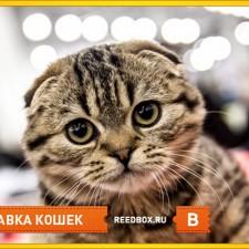 Выставка кошек в августе
