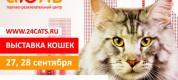 выставка кошек трц июнь красноярск 2014