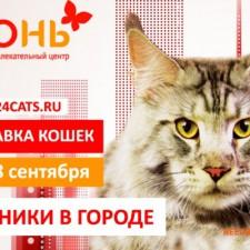 Выставка кошек в сентябре