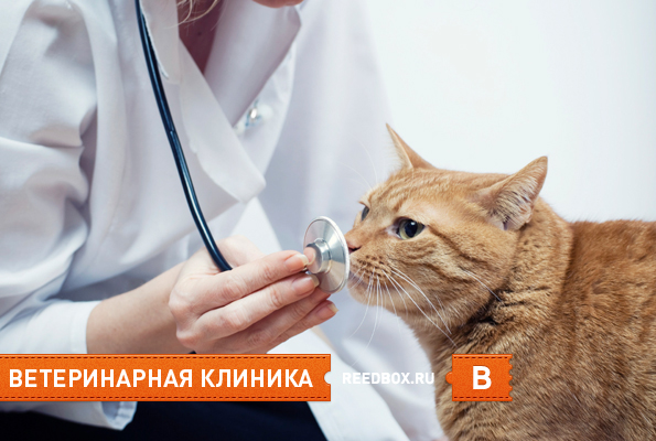 ветеринарные клиники в Красноярске