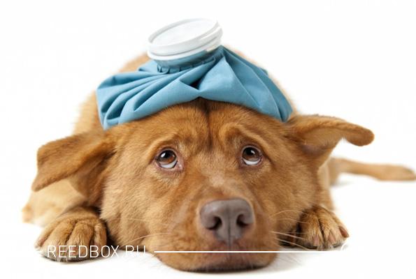 Собака на лечении в ветеринарной клинике