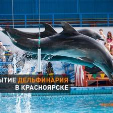 Дельфинарий в Красноярске