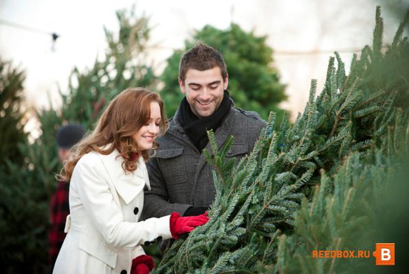 купить живую елку в красноярске