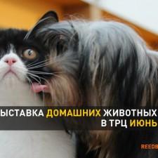 Выставка кошек в январе