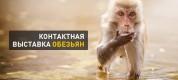 выставка животных обезьян красноярск
