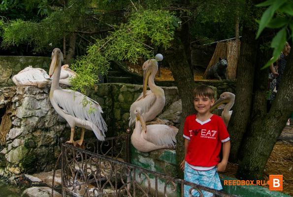 поход в ялтинский зоопарк