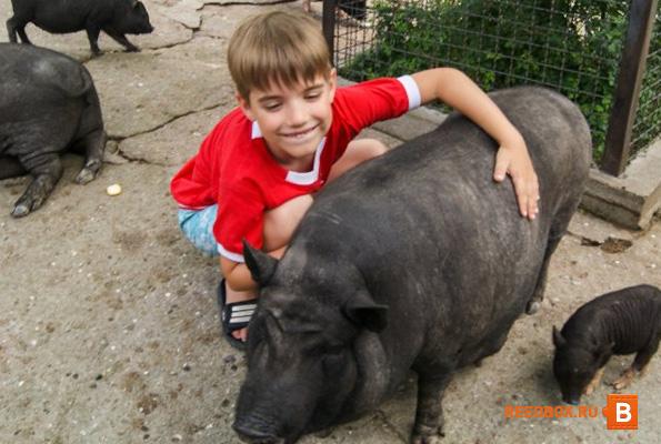 свинья в ялтинском зоопарке