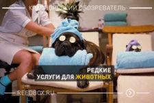Редкие услуги для животных